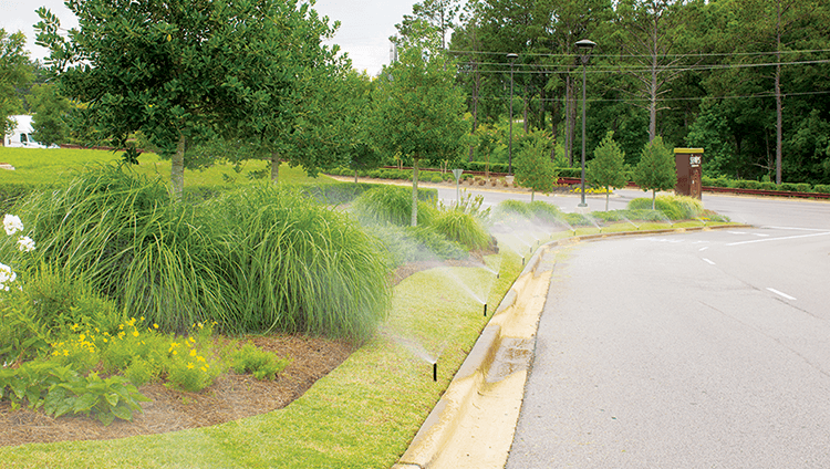 Watering Frequency: When Too Much of Something Good Can Be Bad