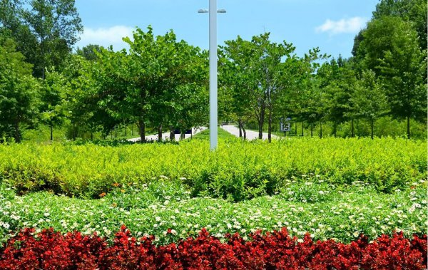 The Right Plant for the Right Place   Mistakes to Avoid in Plant Selection