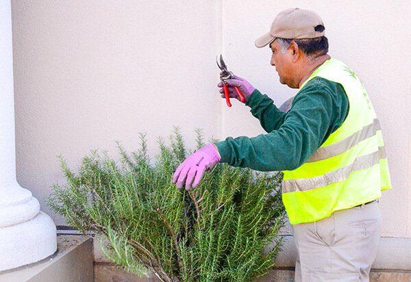LW blog pruning