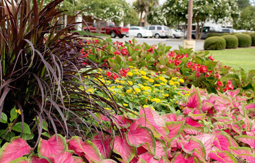 Multicolored flower bed in Mobile, Alabama