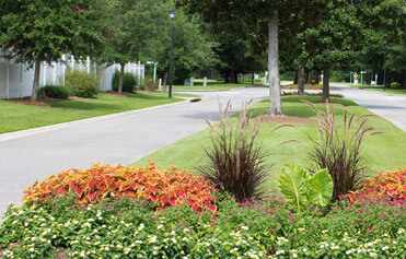 Bright and colorful flower bed in neighborhood median