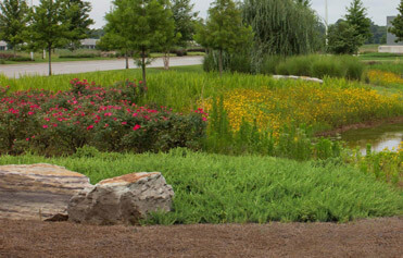 Office park pond surrounded with flowers and ground cover